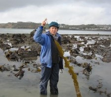 Identifying Seaweed course 13th-15th March 2013